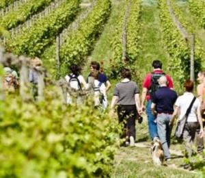 Wine trekking in Franciacorta_ph F Cattabiani TURISMO