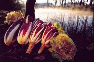 fioridinverno-radicchiorosso