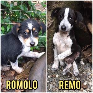 Romolo - Remo