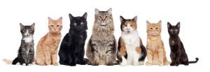 gatti - immagine free diritti assolti