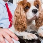 Cane in ufficio - giornata Mondiale