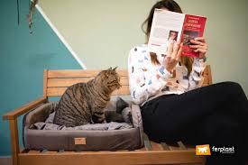 Gatti e quarantena