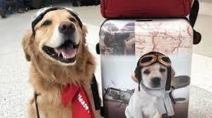 Cani al decollo
