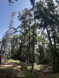 torre rilevamento nei boschi di Cembra - 2